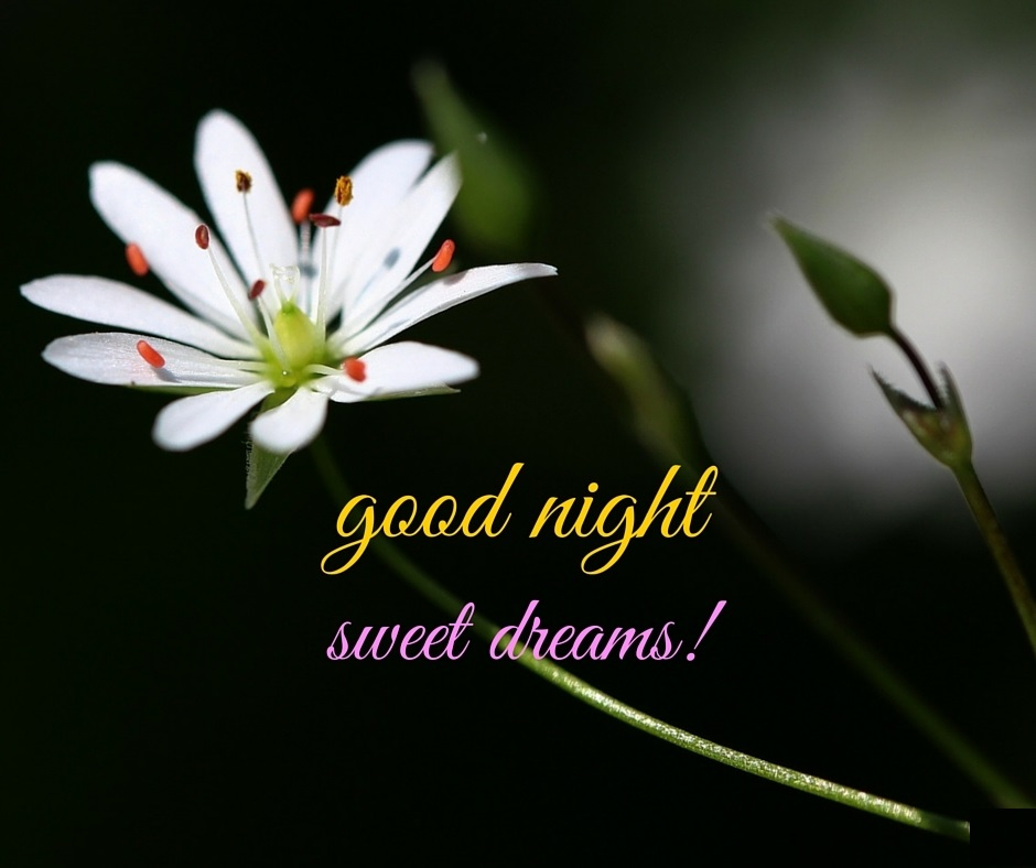 good night flowers images, pictures and wallpapers