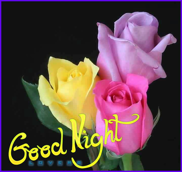 good night flowers